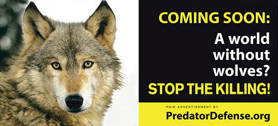 Photo of Yellowstone wolf billboard