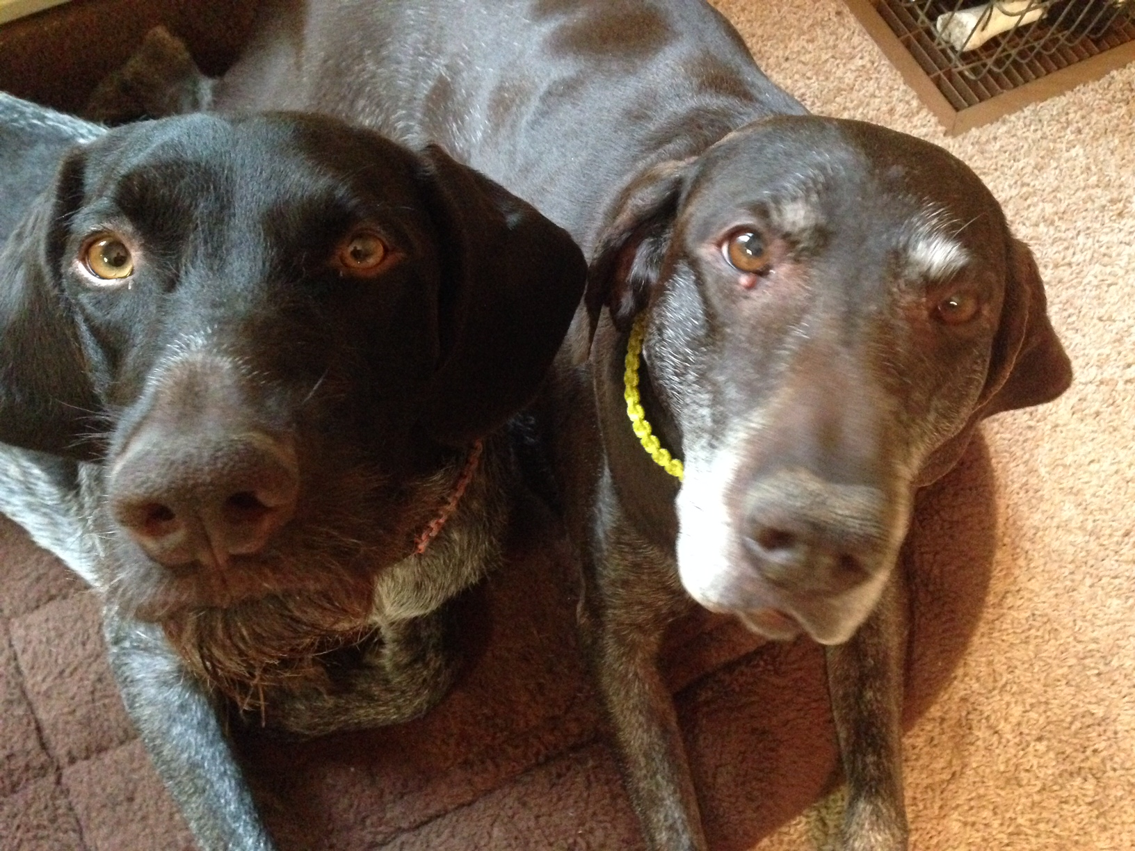 predator defense wyoming families grieving two dogs killed by